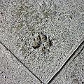 patte sur un trottoir