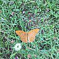 Papillon Chiffre