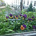 Petites fleurs de fin d'année