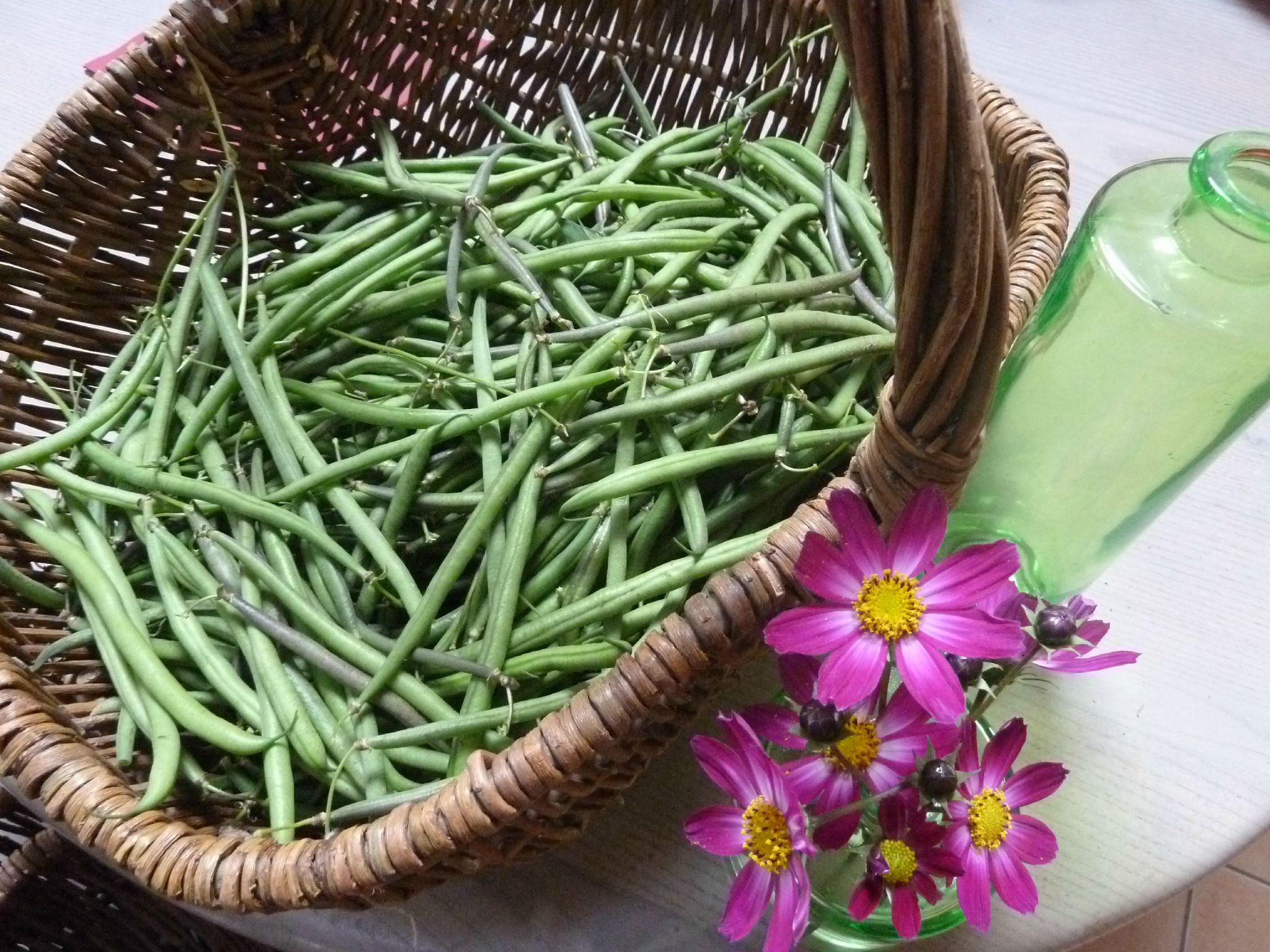 haricots d'octobre - www.passionpotager.canalblog.com