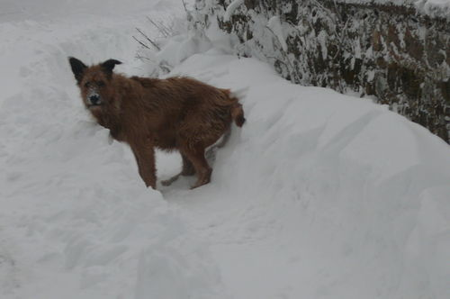2008 12 11 Cacahuète dans la neige