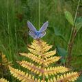 Nouvelles photos nature