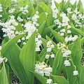 On aime recevoir des fleurs et en offrir, on en met dans la maison, on en plante dans le jardin