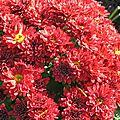 fleurs nov2015 (3)