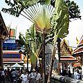 BANGKOK_Palais Imperial arbre du voyageur