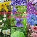 Garden story #2 : pimientos del padron, les semis bis