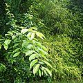 Jardin-brousse