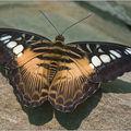 Butterfly (28)