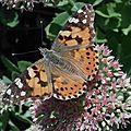 La beauté des papillons