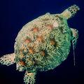 Sel Marine Malaisie-084
