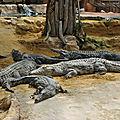Virée... à la ferme aux crocodiles