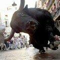 photo-taureau
