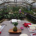 Atelier kokedama dans les serres <b>d</b>'orchidées du <b>val</b> <b>d</b>'<b>Yerres</b>