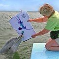 DolphPaint