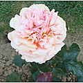 A Brigitte de Morgan La <b>rose</b> et le <b>bonbon</b>