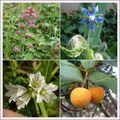Balade botanique de jo