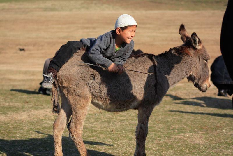 Petit à l'âne