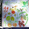 Illustration botanique à l'aquarelle
