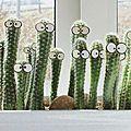 humour cactus
