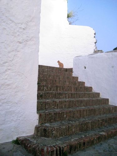chat Grazalema 1