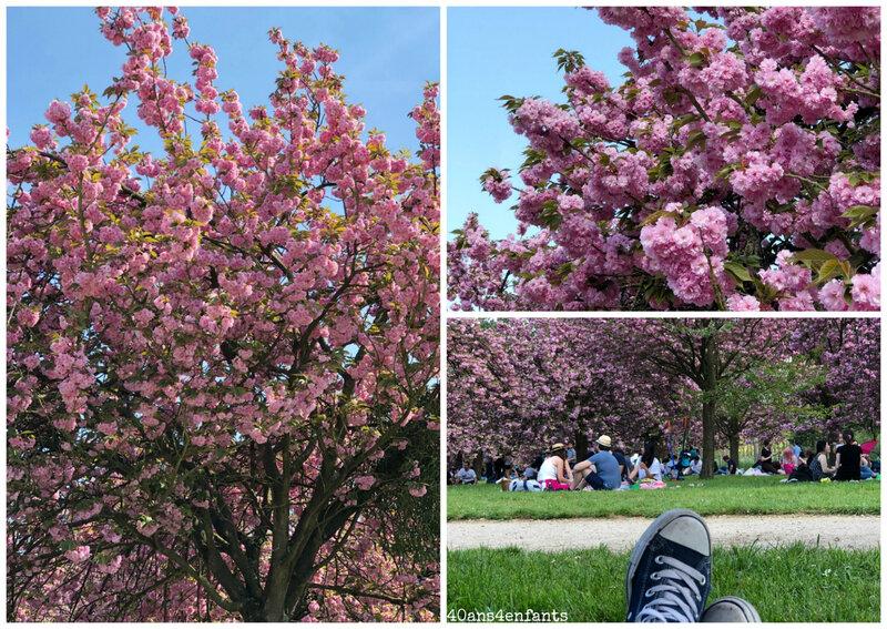 cerisiers en fleur paris