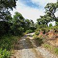 Balade à Ramatuelle-III-Le haut du Cap Taillat- Mai 2014 -