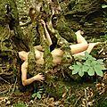 La femme et l'arbre