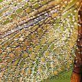 libellule-sympetrum-aile-détail15-04