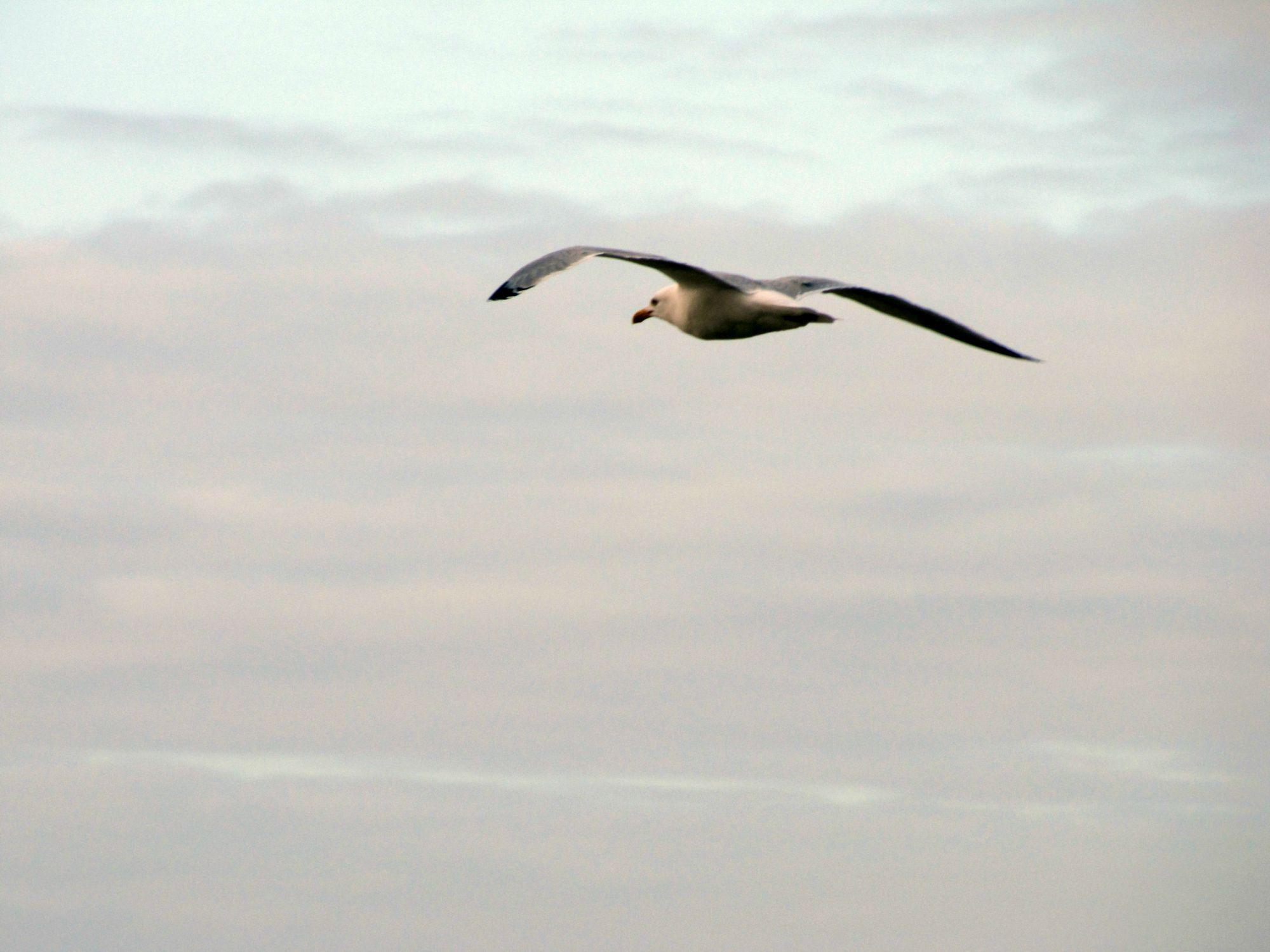Oiseaux ile de re foto Mo2 (54)-h1500