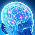 Le binôme cerveau/système immunitaire