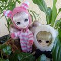 Little Pullip & Dal