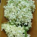 Des fleurs à croquer