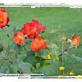 Roses de R