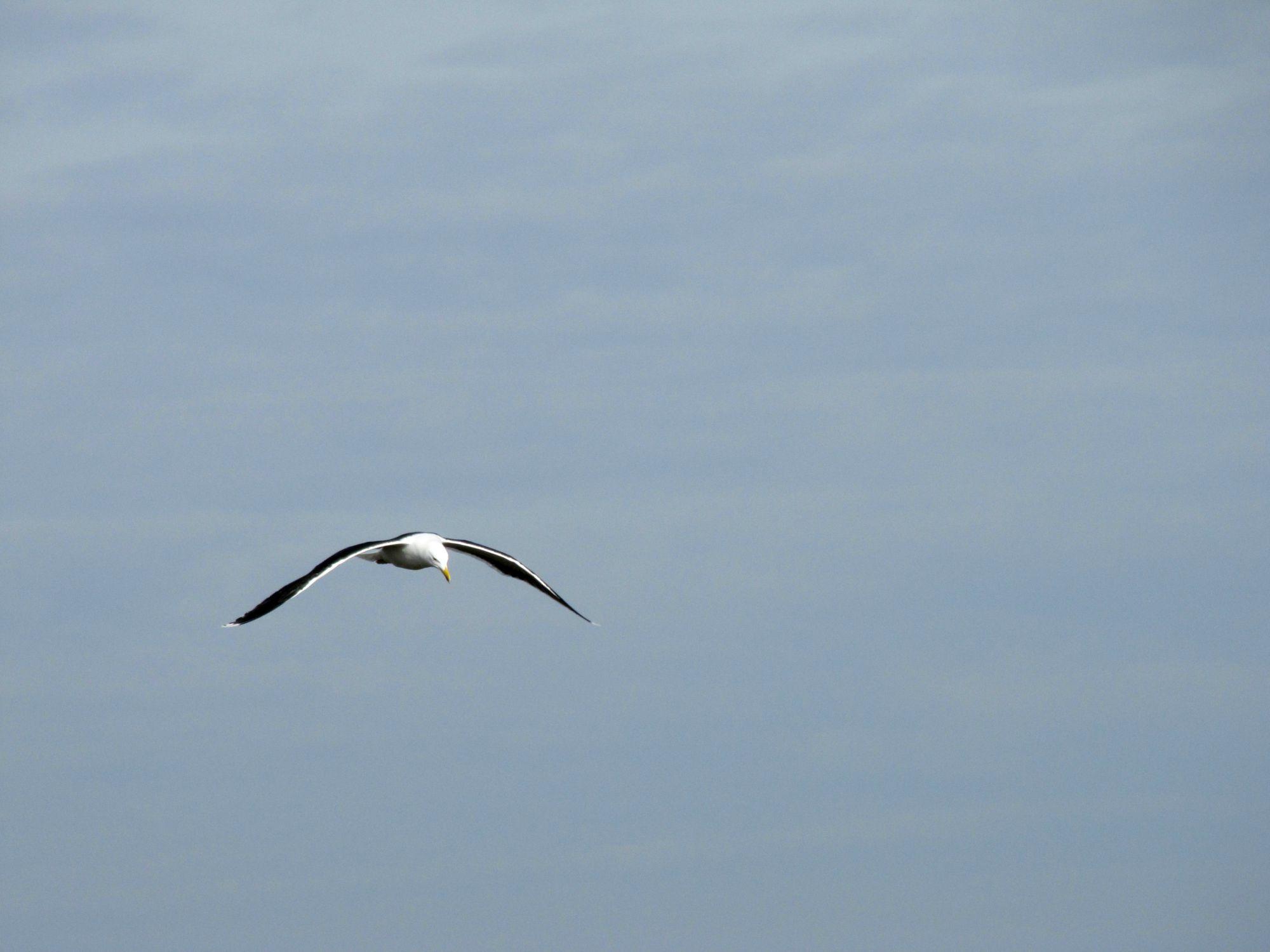 Oiseaux ile de re foto Mo2 (21)-h1500