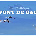 [Sortie] Ma découverte du Parc <b>Ornithologique</b> du Pont de Gau