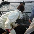 A. Japon: journée en haute mer