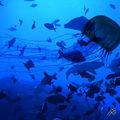 03C. Submarine