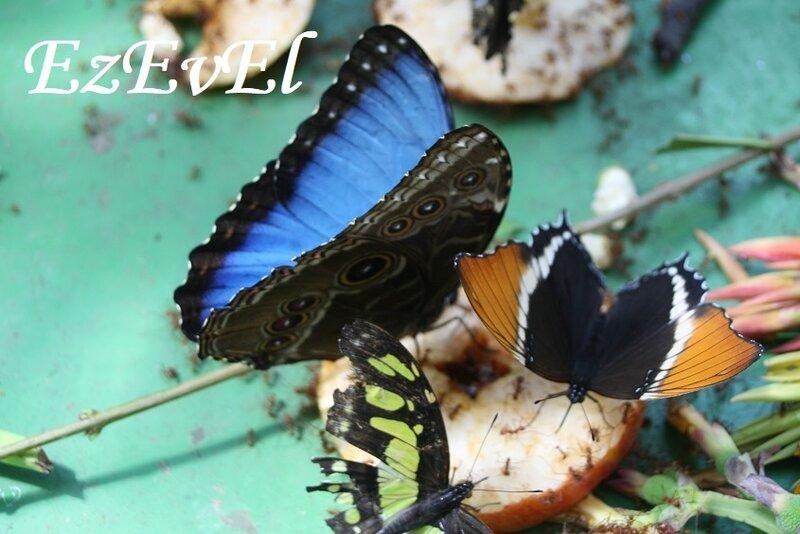 jardin papillons 2 EzEvEl