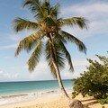 Palmier seul plage des Salines