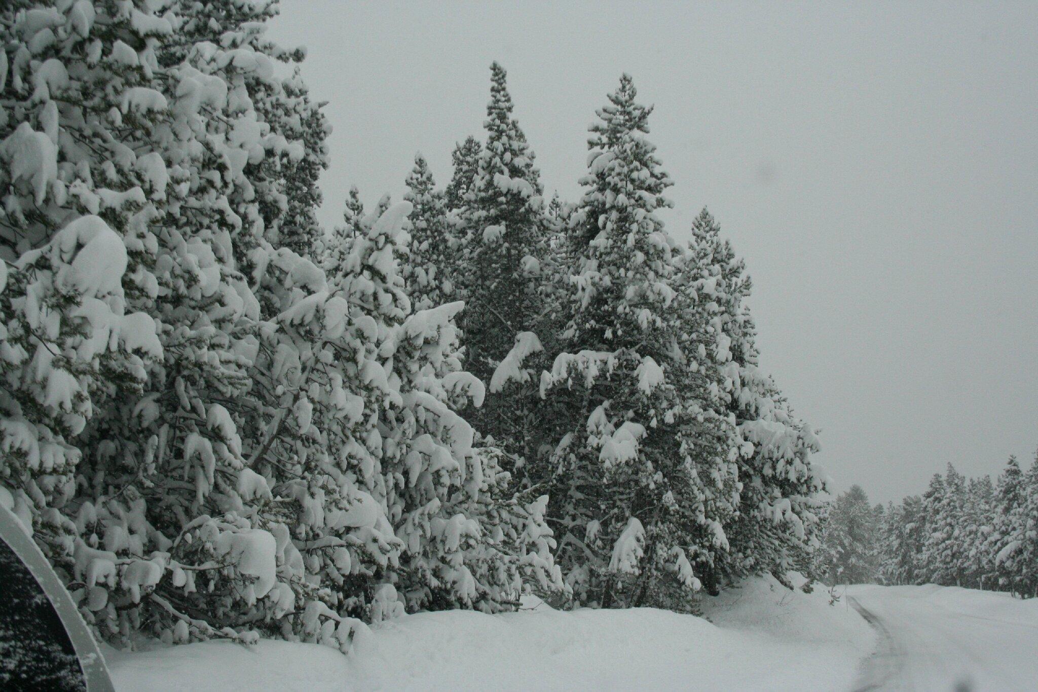 un hiver tout en contraste
