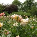 Sweet gardens