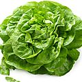 Salade verte épicée