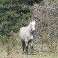 2008 04 16 Un cheval