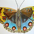 Ronde des papillons