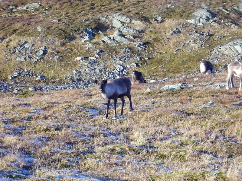 17-10-08 Sortie Montagne et rennes (131)