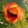 Tulipes de Pâques...