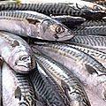 les pistes de relance de la pêche