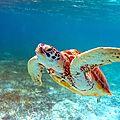 Sauvez les tortues marines