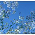 a-Un jardin sous le ciel-Mai-juin 2013