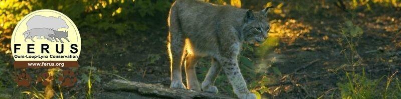 Loups, Lynx, Ours,... : les dernières de Férus !